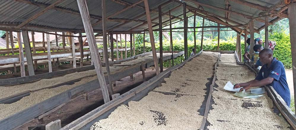 """Unter Dächern vor Regen geschützte Trocknungssiebe in der """"Kinone Micro Washing Station"""", Westuganda"""